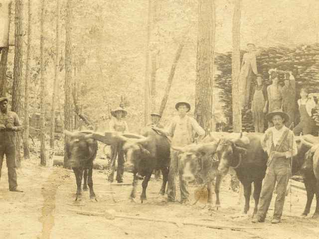 McGehee sawmill in Alabama. Center - Clarence Clay McGehee,